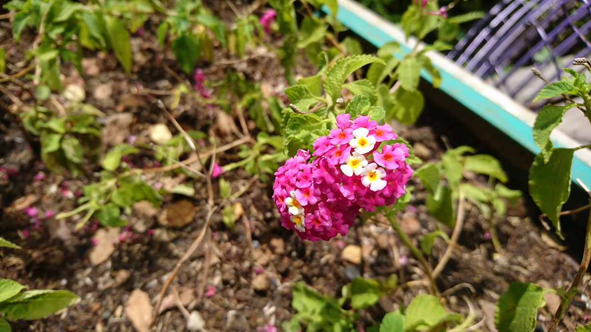 xperia-x-sample-photo-20160614-09